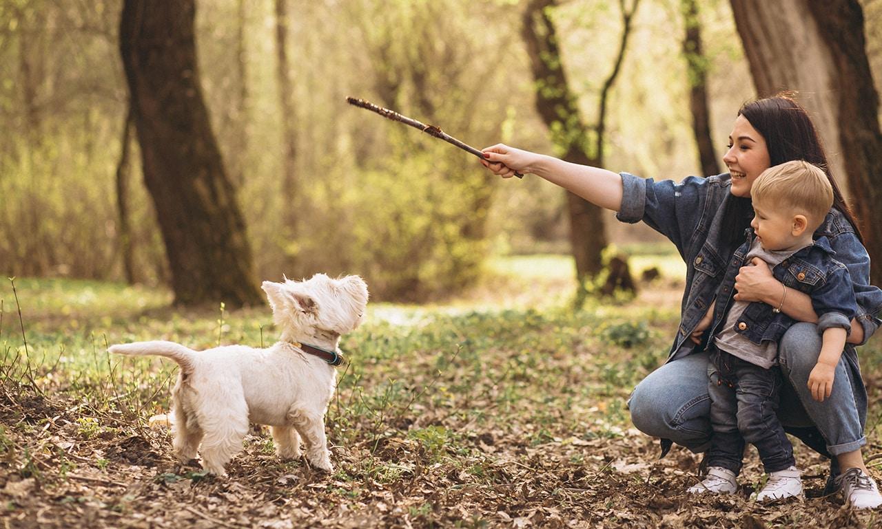 puppy gehoorzaamheid