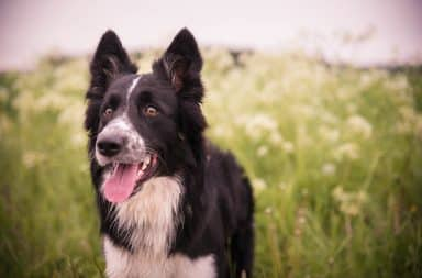 feiten fabels honden