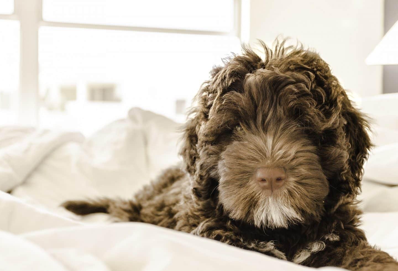 Met de hond in bed slapen?