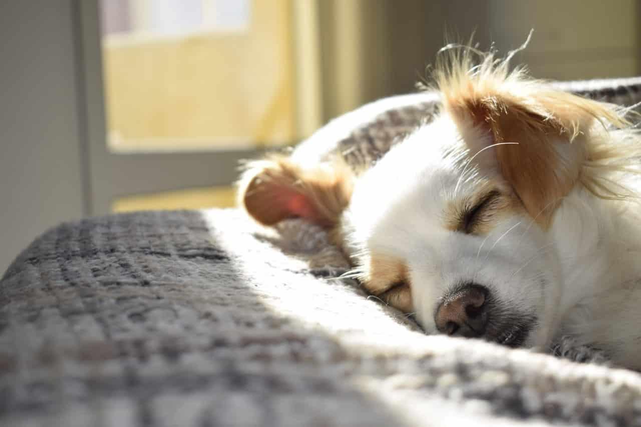 Hoe zorg je voor een blinde of slechtziende hond?