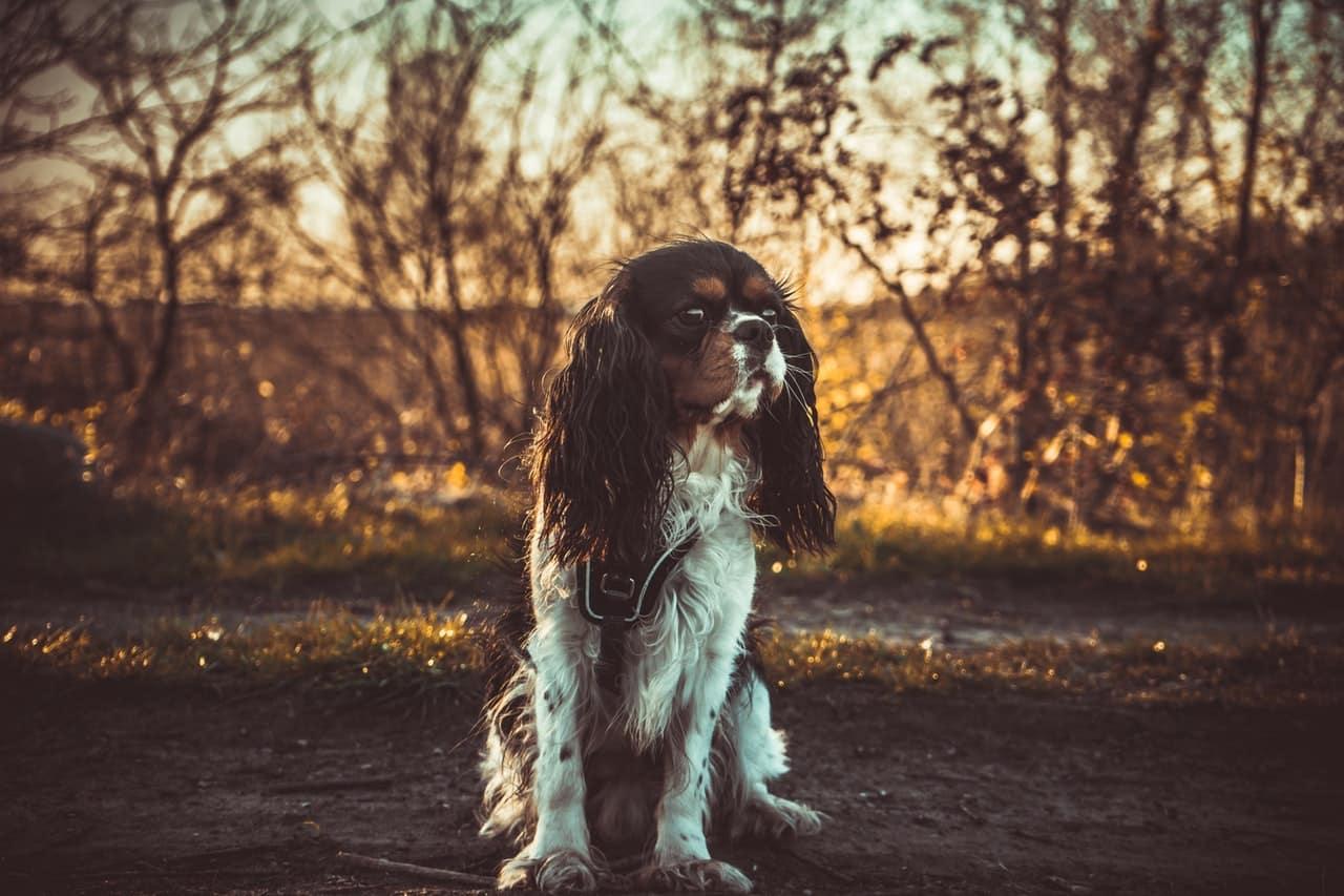 5 tips om hondenfoto's te maken