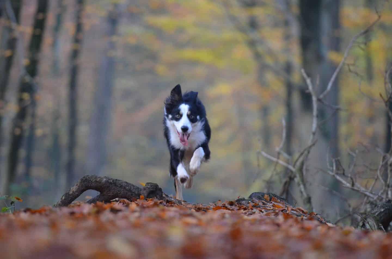 Redenen om een oudere hond te adopteren
