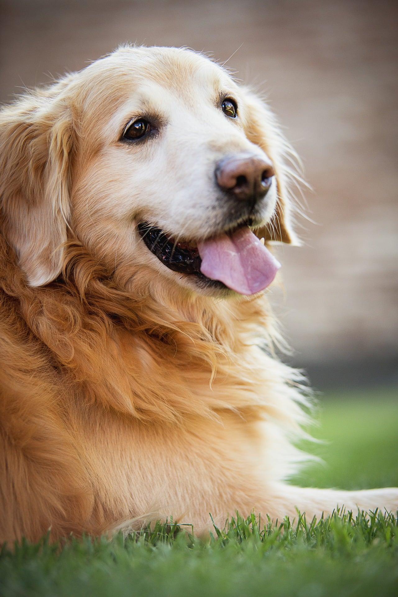signalen oudere hond