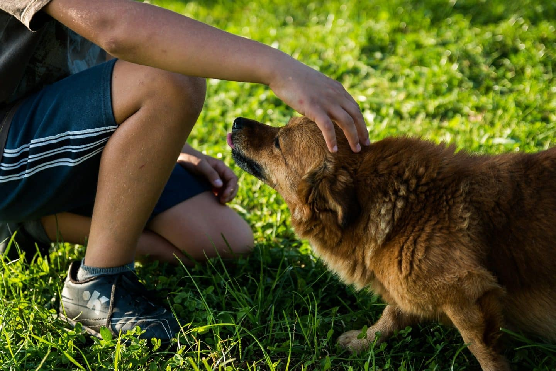 wespensteek bij hond