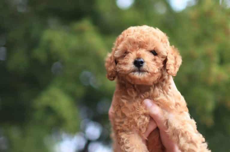 eerste drie maanden puppy