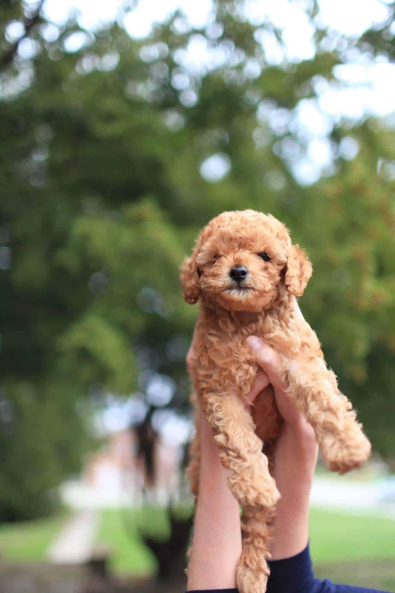 De eerste 3 maanden van uw puppy