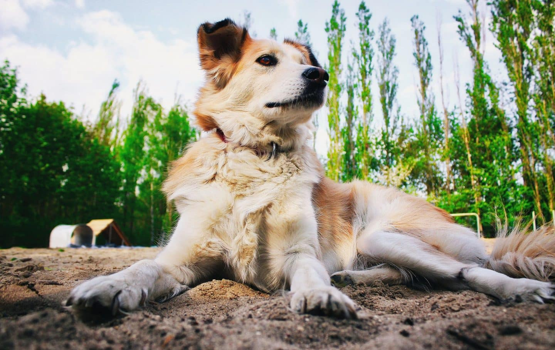 hond trainen clicker