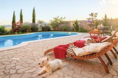 huisdiervriendelijk vakantiehuis novasol