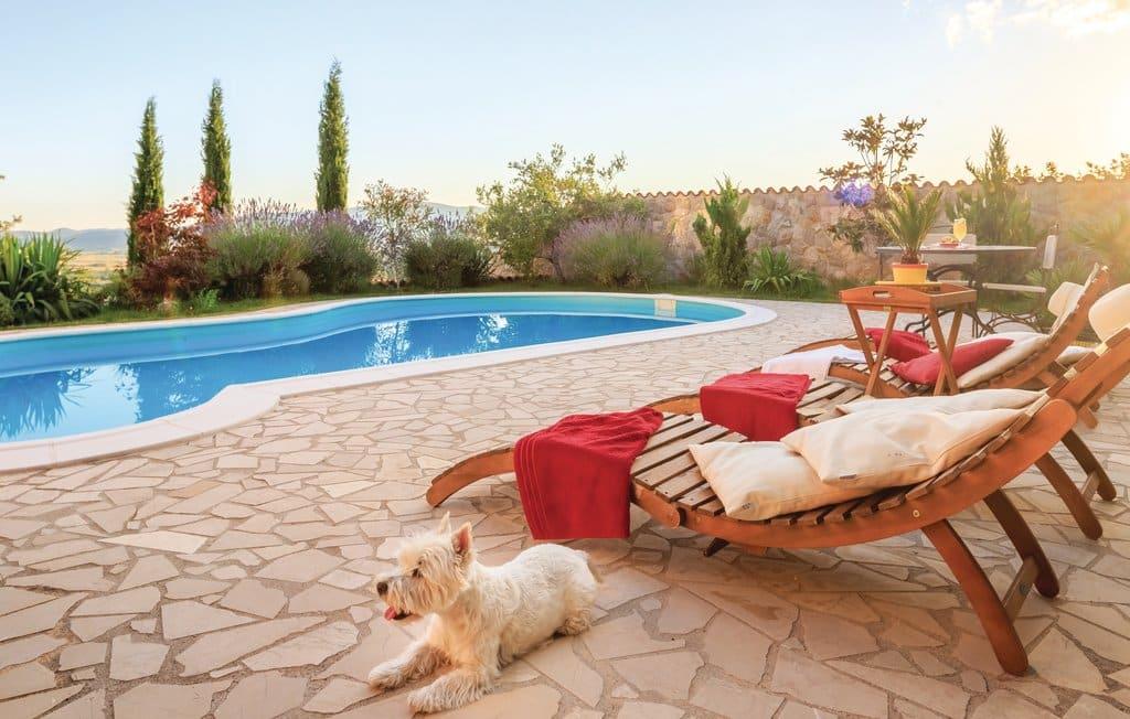 6x de meest hondvriendelijke vakantiebestemmingen