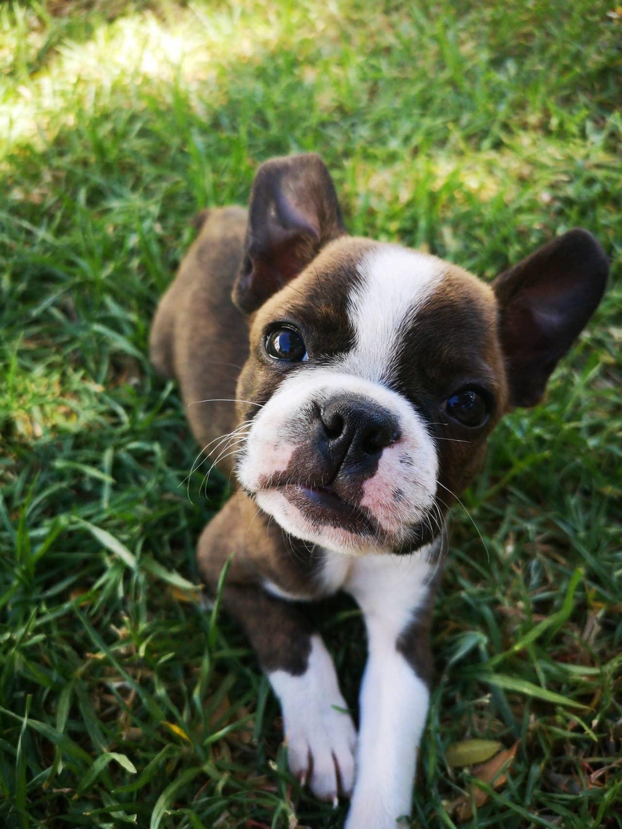 voor het eerst een puppy