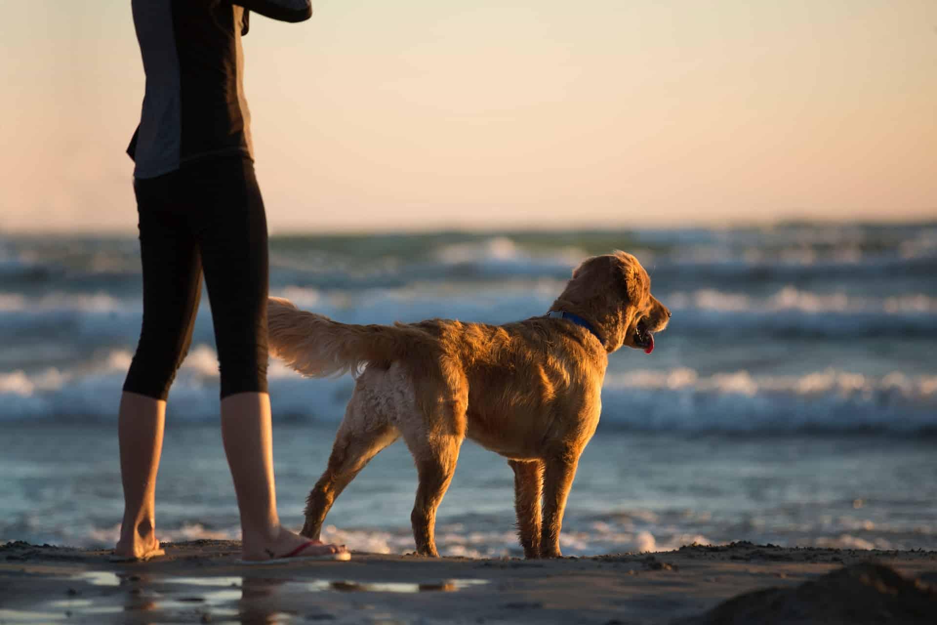 actief met je hond