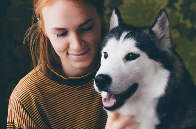 honden verzekering vergelijken