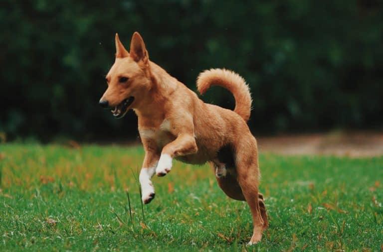 handige apps voor honden