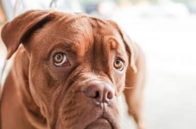 Kunnen honden het Coronavirus krijgen