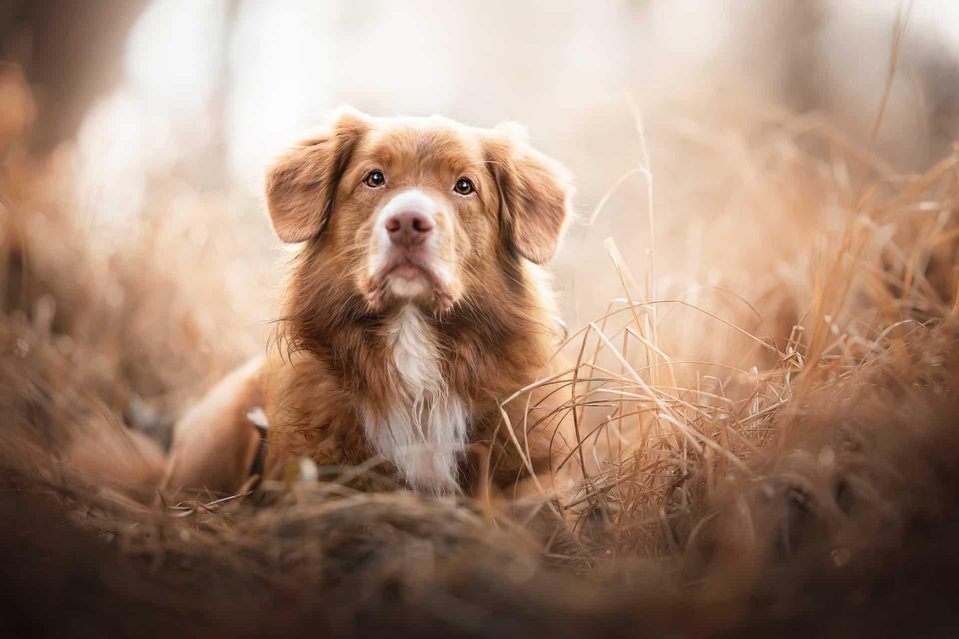 Hondenspeelgoed voor koude winterdagen