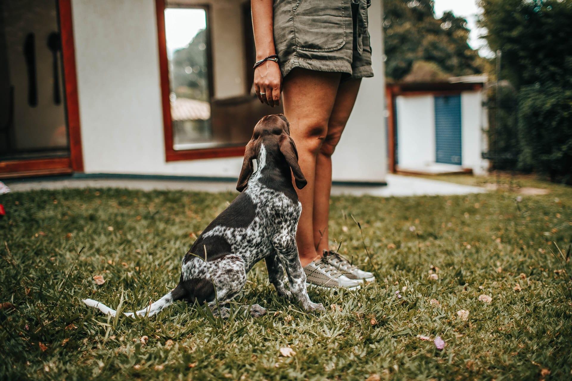 artikel jachthonden