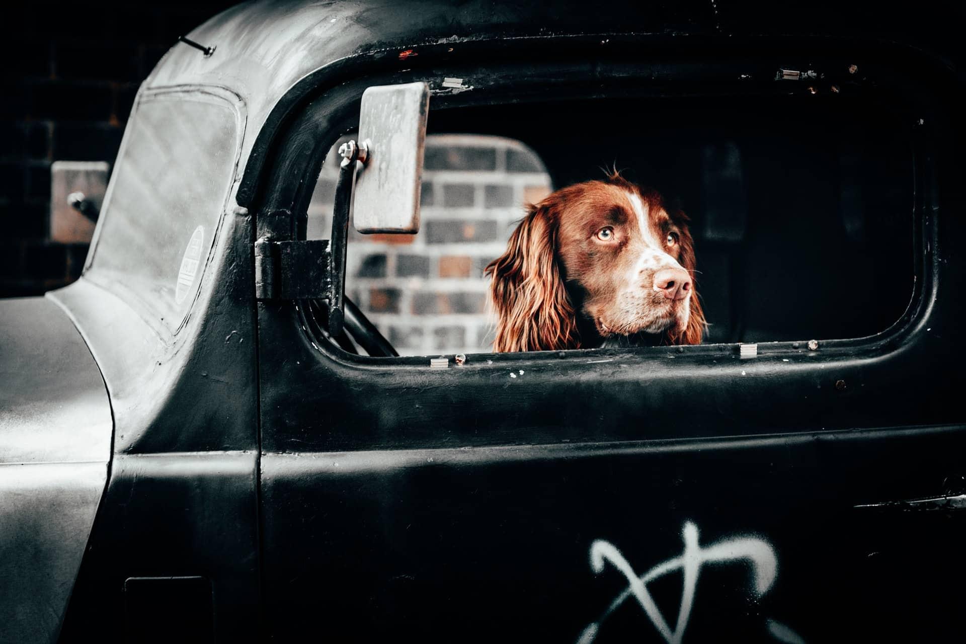 Hond veilig in de auto