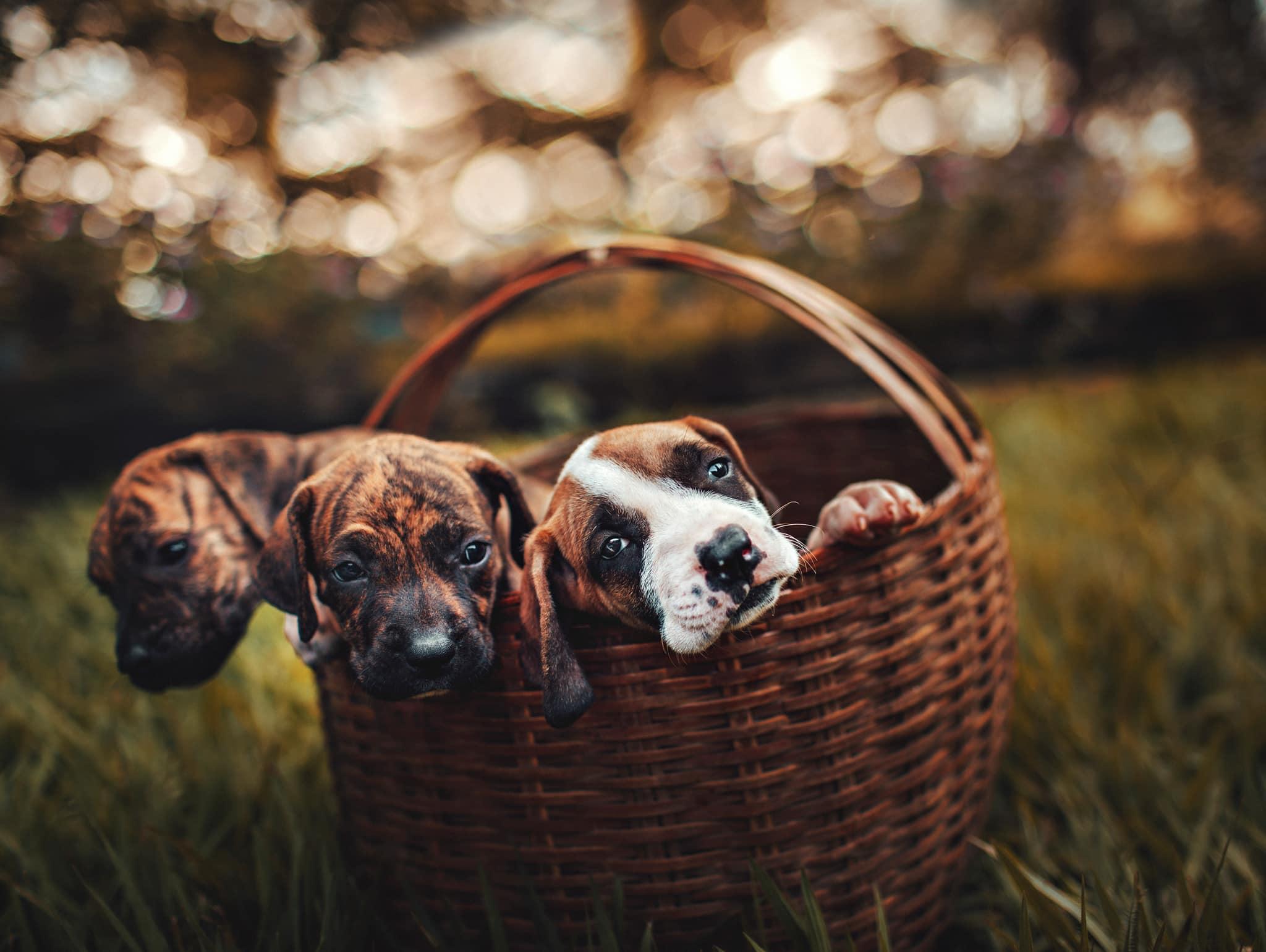 hondenbelasting 2020