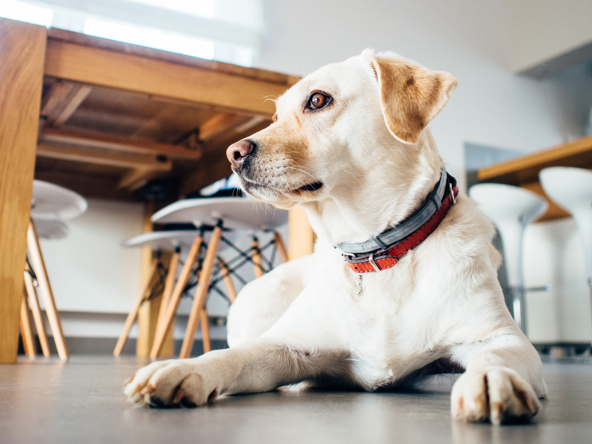 ehbo tips honden