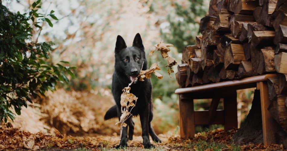 hond achtertuin