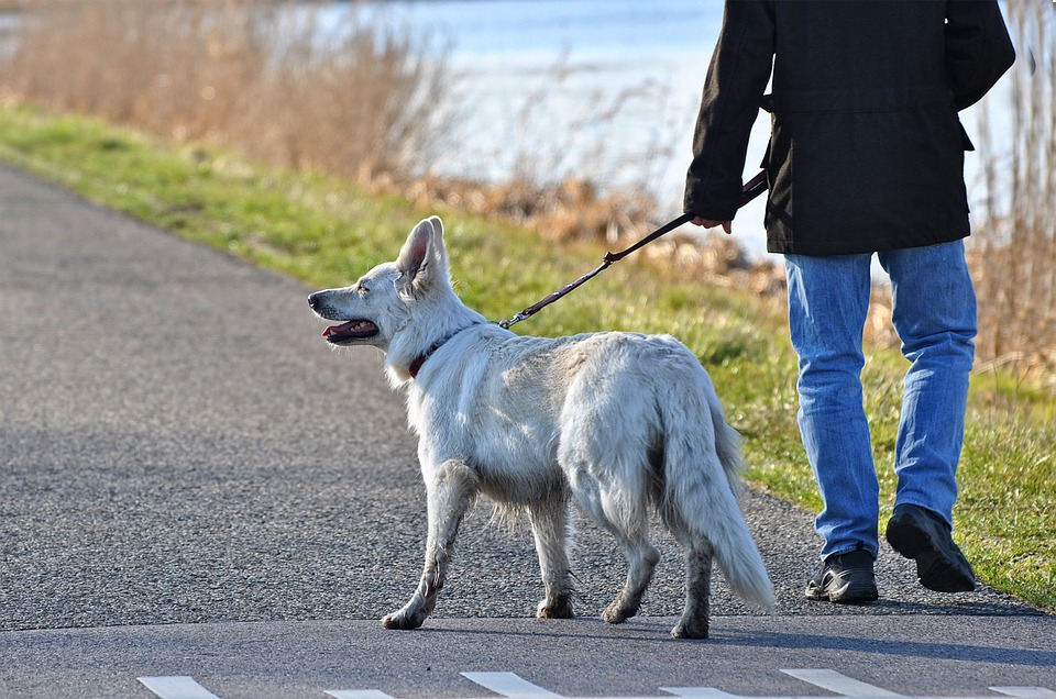 hond mee naar werk