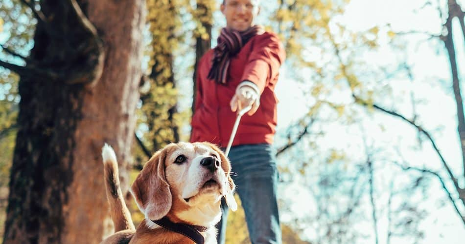 vakantie met hond tips