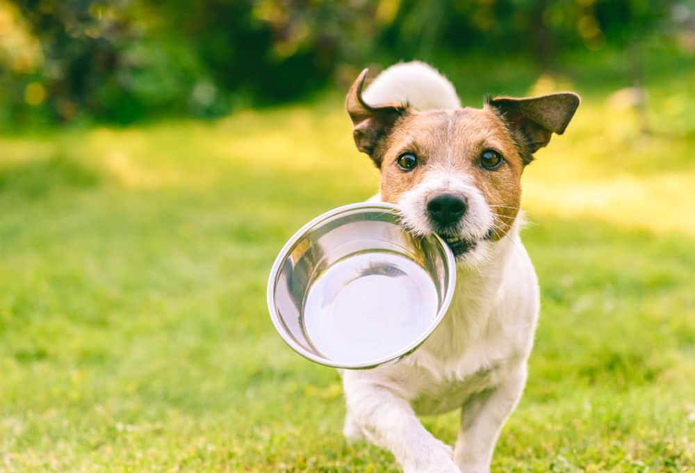 water drinken hond