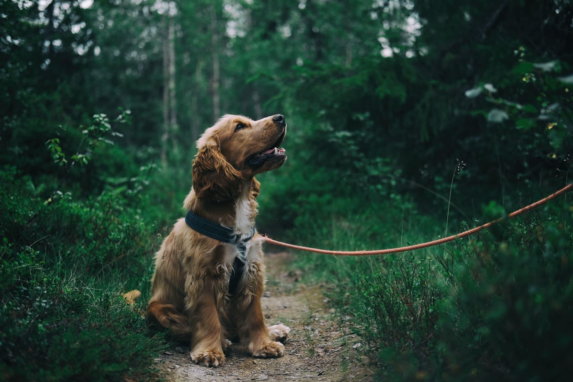 beste hondenriem