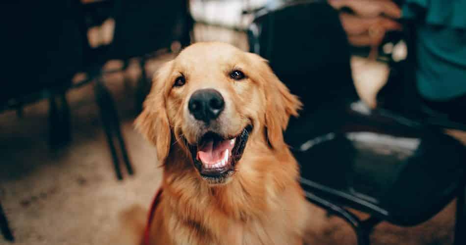hond maakt gelukkig