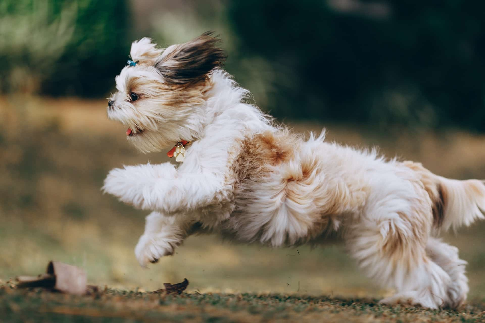 hondenverzorging tips