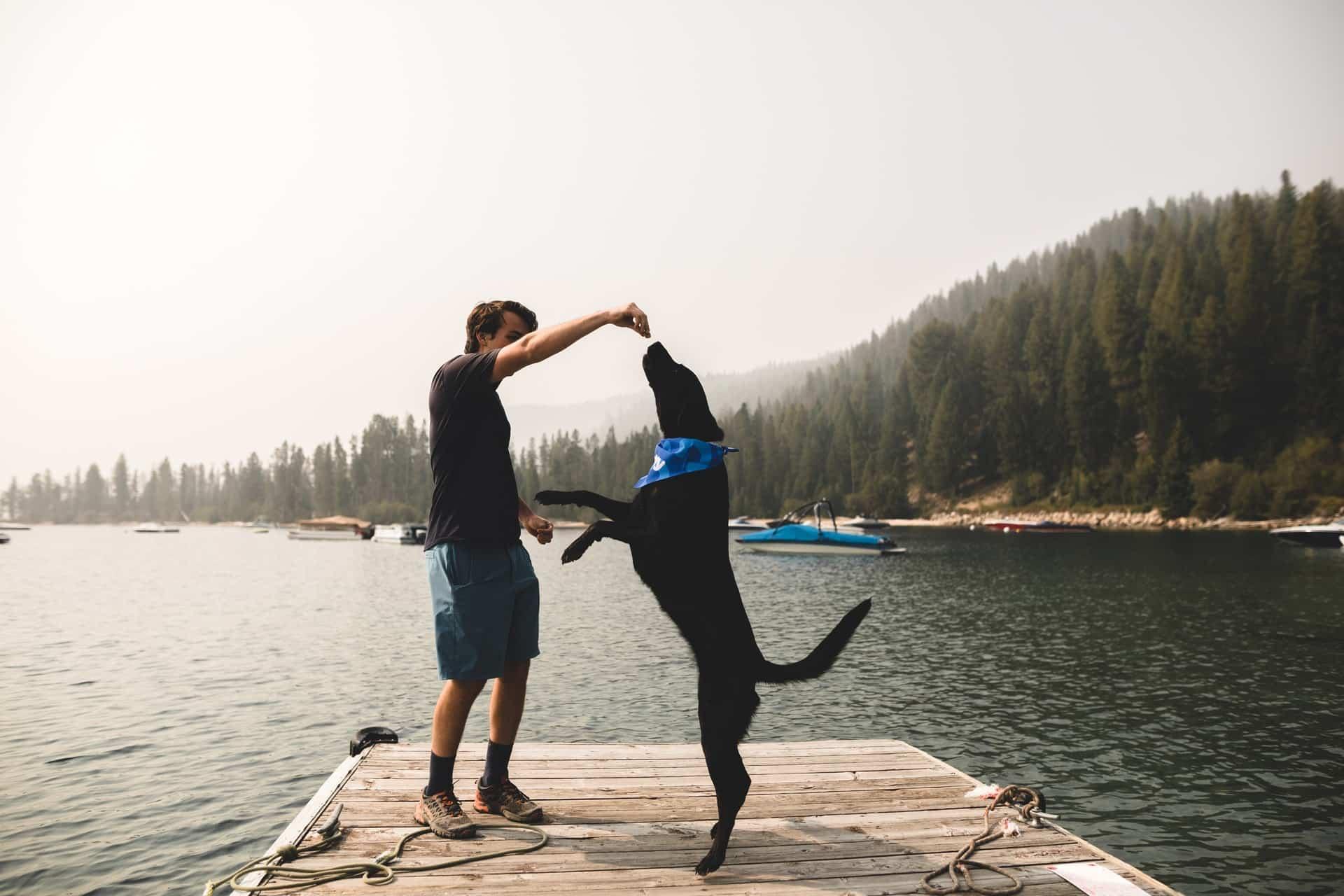 huisje huren met hond
