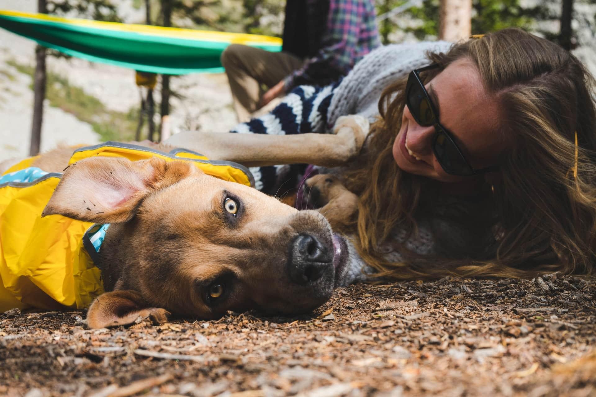 maakt een hond gelukkig
