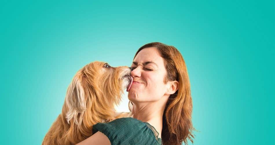 uiterlijke kenmerken honden