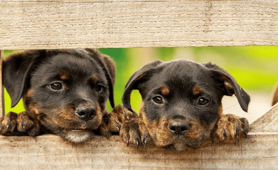 checklist puppy
