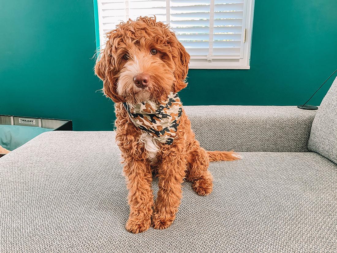 honden bandana