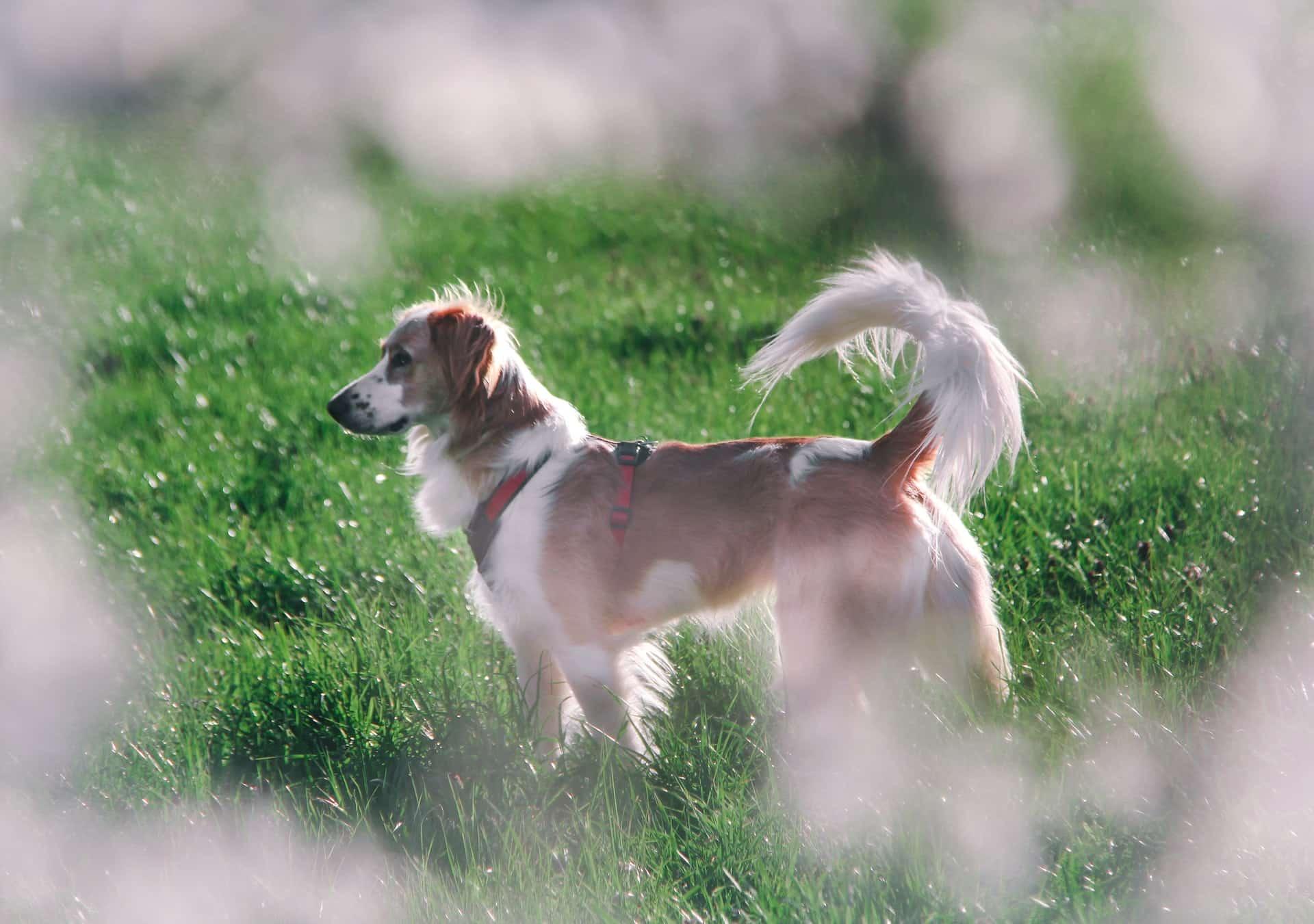 hond gehoorzaamheid