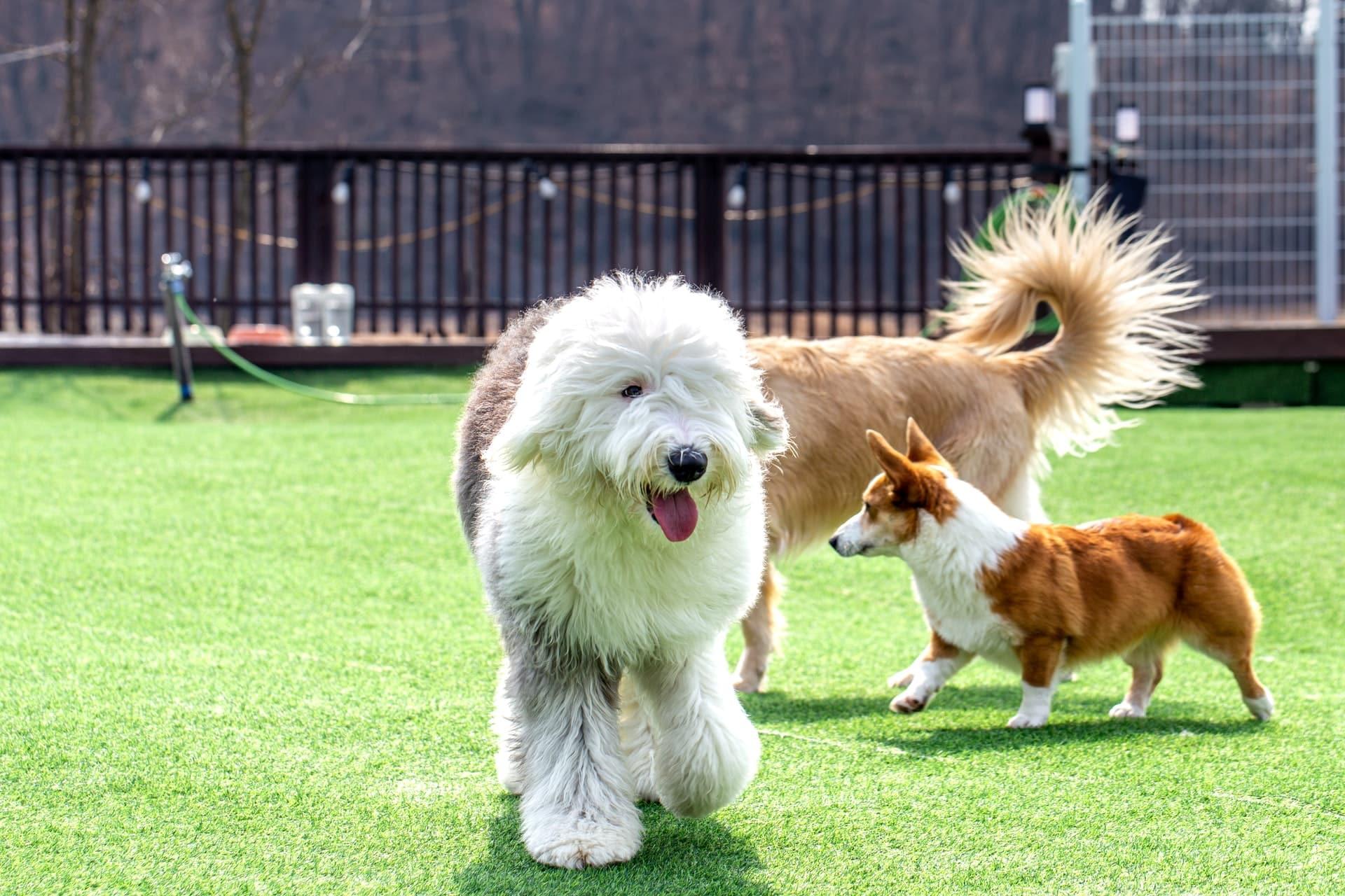 honden commandos