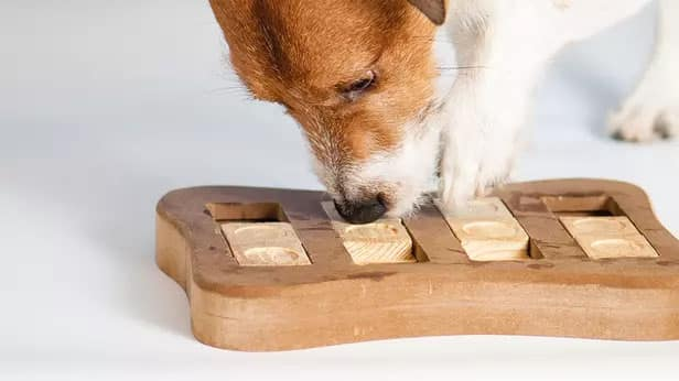 Spelletjes Met Hond Blog.jpgkopie