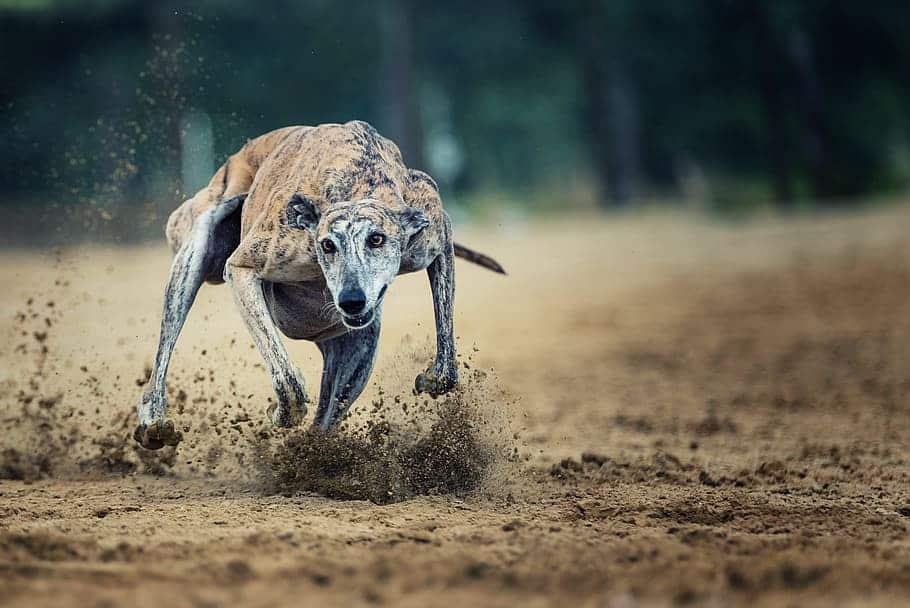 Action Racecourse Race Sport