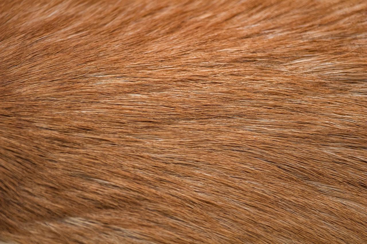 Fur 5655188 1280